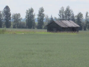 Lush 1/4 Section near Mackay/Chip Lake - Yellowhead County, AB Edmonton Edmonton Area image 3