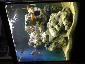 Looking for 100 gallon tank