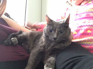 Beautiful 3yr old female cat looking for furever home