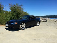 2002 Ford Mustang SVT COBRA Convertible
