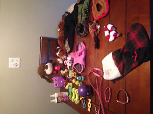 Small dog toys and accessories!!!!!!
