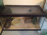 Ball python for sale, needs a good home!