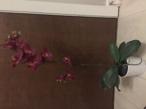 Decorative orchid plant with pot
