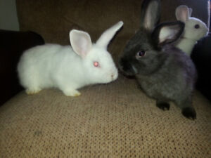 Baby bunnies for sale'- Just in time for Easter