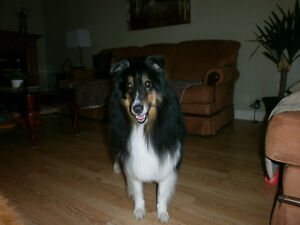 EXPERIENCED IN-HOME/PET SITTER