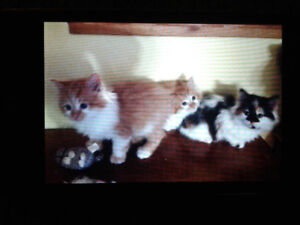 Super sweet kittens ready to go to good homes