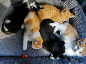 Gorgeous kittens ready for a new loving home