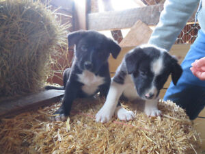 Puppies to be rehomed