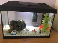 Fish tank and everything you see