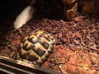 Tortoises and viv