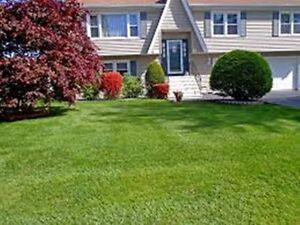 Quality Lawn Cutting, Lawn Edging, Hedge Trimming Services Kitchener / Waterloo Kitchener Area image 3