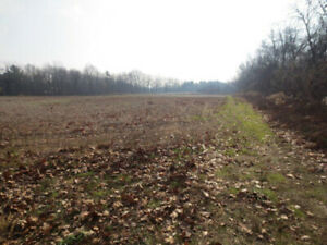 19 acre building lot