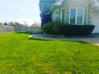Lawn care fall maintance Vaughan Maple Richmondhill Thornhill