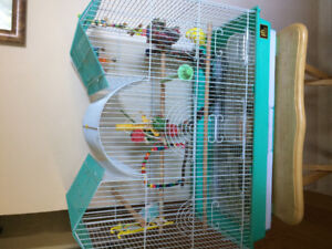 Two beautiful budgies with a large cage