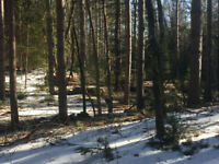 Earn money from your woodlot.  Red pine Plantation thinning