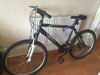 Mountain Bike Adult for sale