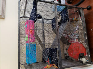 Pet rats with cage and accessories for adoption