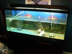 120 gallon aquarium with brand new stand Cambridge Kitchener Area image 3