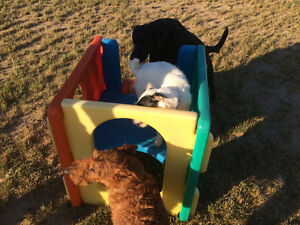Dog Boarding Kennel and Daycare London Ontario image 6