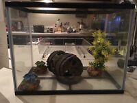 Beginners Fish Tank Set