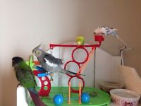 Looking for a new home for your birds? I can help!