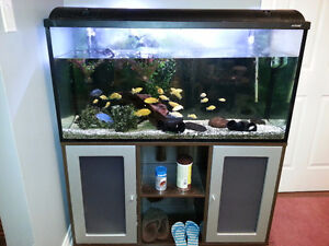 77 gal tank complete with fish for sell plus extras