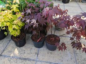 Plants Last Few 🌿