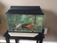 10 gallon fish tank and four fish. sell or trade