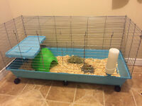 2 female guinea pigs with cage and accessories etc.