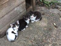 3 farm kittens for re-homing