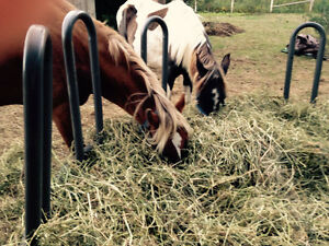 4year old gelded and 3year old Peterborough Peterborough Area image 2