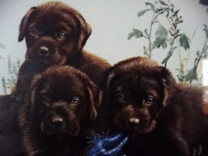 """Hand Signed Lithograph by Amy Brackenbury """"Chocolate Cluster"""" Stratford Kitchener Area image 4"""