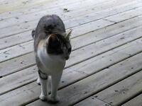 LOST CAT, CEDAR AREA