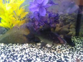Fish tank full set up 3 fish bargain