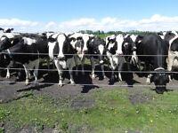 Milker/All round dairy worker