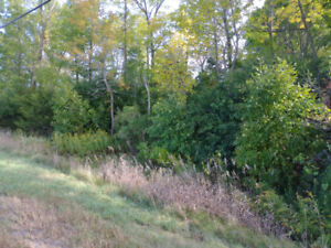 What a deal! Building lot on County road 9 for under 30k!