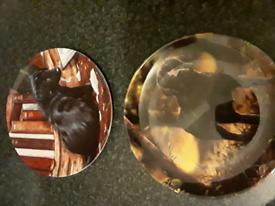 wedgewood Labrador plates
