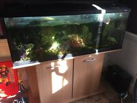 Fish Tank & stand, Fishes and more