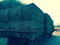 Large squares of hay and round bales of hay