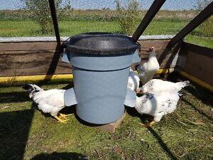 Indoor/Outdoor Pet Feeder! Cats Chickens Turkeys Ducks Rabbits!