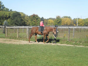 ISO: Volunteers for farm help with horses + kids London Ontario image 3