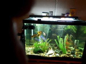 Family fish tank with