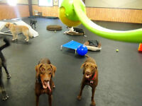 NEW Doggy Daycare!!