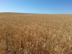 GRAIN LAND FOR RENT IN FOXFORD AREA.
