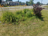 Winter is coming! - Flower beds, Yard Clean ups, Landscaping+