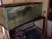 75 gallon fish tank plus accessories