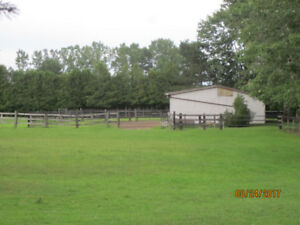 HORSE BOARDING IN RODNEY, GREAT TRAILS lots of pasture