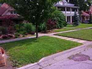 Lawn Care and grass cutting London Ontario image 7