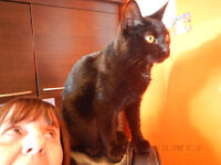 """""""SALEM"""" extra toes!  -- Fixed & Vaccinated  -- @ Small Things"""