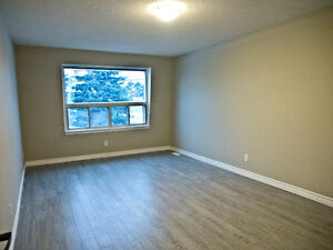 Newly Renovated 2+1 Bedroom Townhouse Kitchener / Waterloo Kitchener Area image 5